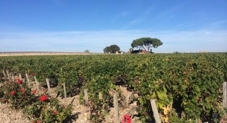 Médoc - Bordeaux - landskap